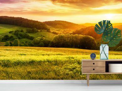 Blühende Wiese bei Sonnenuntergang, ein Panorama mit stimmungsvollen Farben