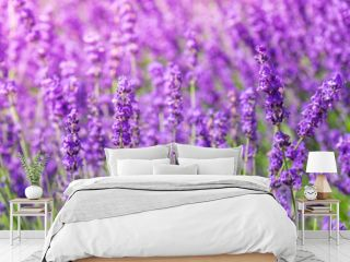 Lavender flower on the field