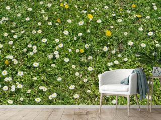 White daisies fields