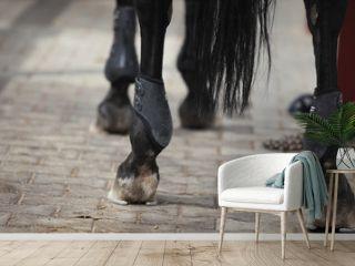 Gamaschen am Pferdefuß
