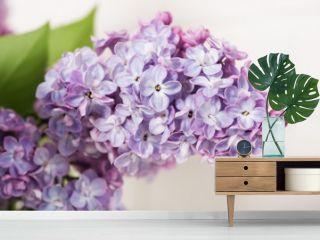 beautiful lilac in bloom