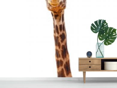 Giraffe Closeup Isolated - Happy Expression