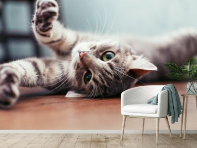 Beautiful gray cat lying on the floor. The concept of pets.