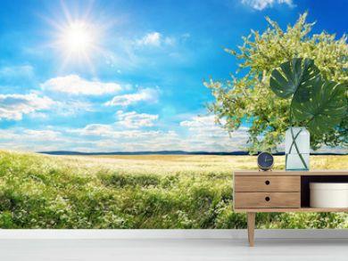 Weite Wiese im Frühling, mit blühendem Baum, blauem Himmel und Sonne