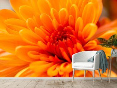 orange flower as a background