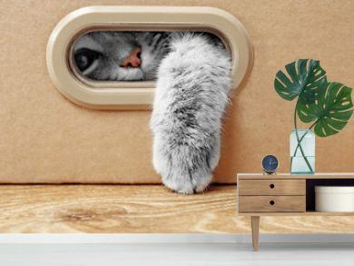 Cute cat in cardboard box