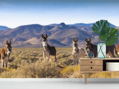 Wild Burros in Nevada Landscape