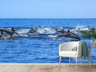 A hundred dolphins group swim and jump off the coast of Isla Espiritu Santo in Baja California, Mexico.