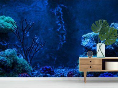 Reef tank, marine aquarium. Gorgonaria Euplexaura, Sea Fan. Clavularia. Zoanthus. Blue aquarium full of plants. Tank filled with water for keeping live underwater animals. Night view.