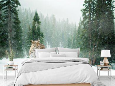Leopard im Schnee