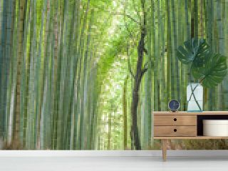 Bamboo forest in Arashiyama, Kyoto Japan