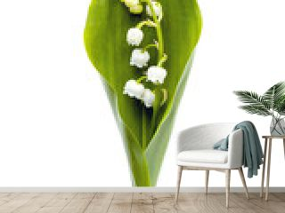 Lily-of-the-Valley Isolated on White