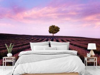 Lavender flowers blooming field, lonely tree uphill on sunset
