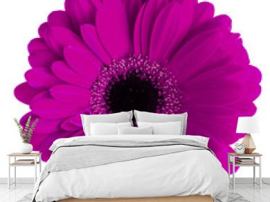 Colored gerbera macro isolated on white