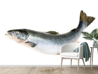 Salmon fish isolated on white without shadow