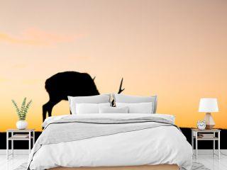 Deer buck in mountain at evening