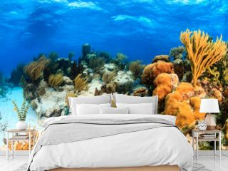 Colorful shallow water coral lagoon in the tropics
