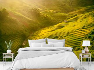 Morning rice terraces in the gorge. Vietnam Rice field terraces on the mountains in Mu Cang Chai Vietnam.