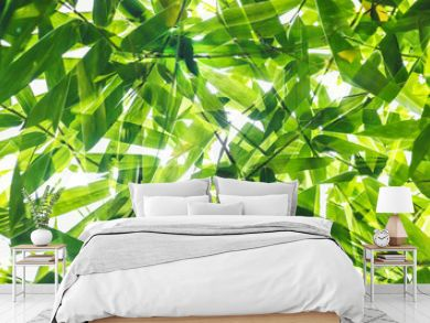 Green bamboo leaf pattern on white background