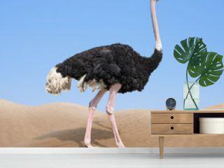 ostrich in desert