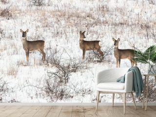 Roe deers in winter meadow (Capreolus capreolus)