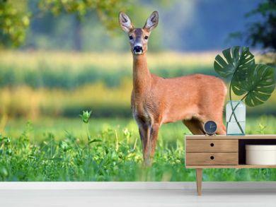 Wild female roe deer in a field
