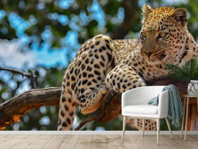 Namibia Okonjima game reserve leopard