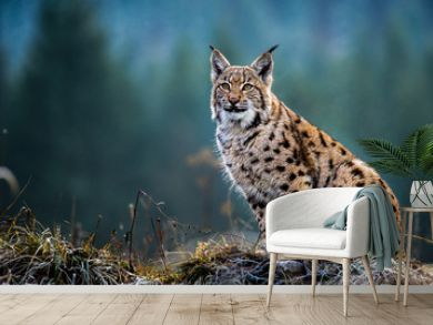Eurasian lynx, snow, winter