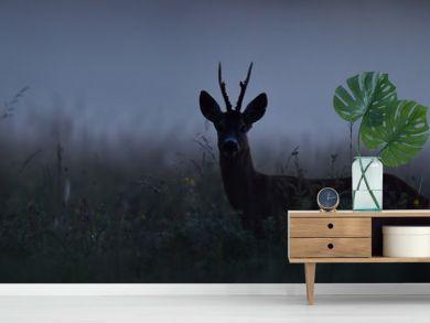 Roe deer at night. Roebuck at night. Animal in the mist.