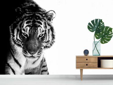 tiger eyes black and white