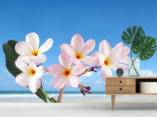 close-up pink plumeria or frangipani flowers blooming with sand beach and bright blue sky background, colorful tropical flowers are fragrant and bloom in summer, beautiful nature background