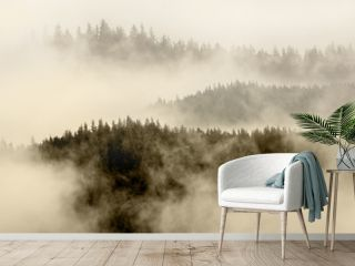 fog covering the mountain forest