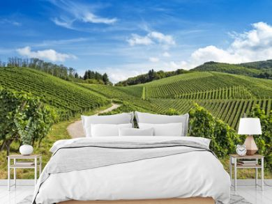 Curved path in vineyard landscape