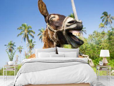 Funny Animals Donkey