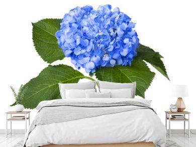 Nice blue hydrangea