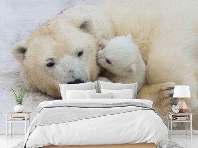 Polar bear with cub