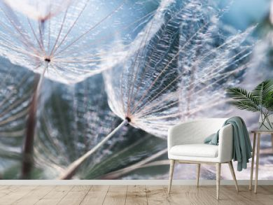 delicate natural backdrop of the fluffy seeds of the dandelion flower in soft blue tones