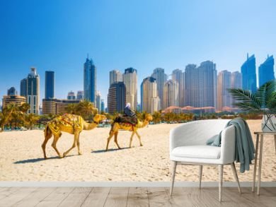 The camels on Jumeirah beach and skyscrapers in the backround in Dubai,Dubai,United Arab Emirates