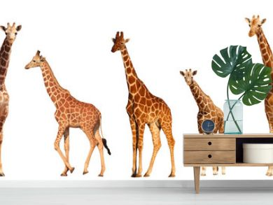 Reticulated Giraffe family, mothers and young, isolated on white background