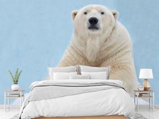 Белый медведь лежит на снегу.