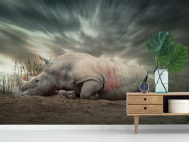 Nashorn getötet