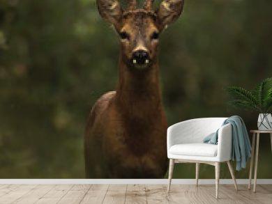 Dark deer in the woods