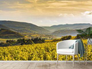Bourgognes, vignes et paysage