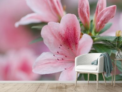blur floral background lush fresh azalea flowers