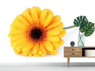 Wonderful Gerbera isolated on white background, inclusive clipping path without shade.