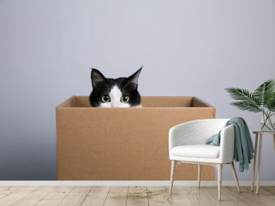 cardboard box with a cat
