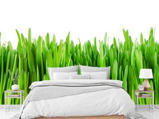 Fresh green grass edge