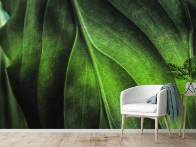 Green plant leaf texture, macro shot. Nature background, spring flora