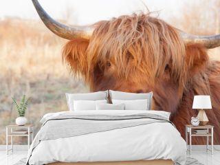 closeup partial cow