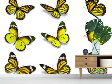 monarch butterfly collection
